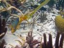 Bonaire 2008